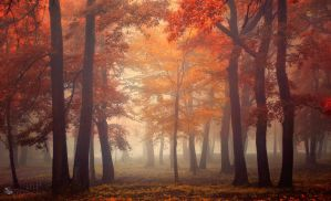 Tree Fairy by ildiko-neer