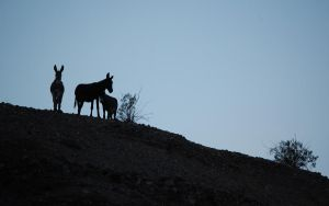 Tres Burros by 1ironaut