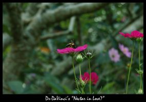Nectar in love? by Dr-DaVinci