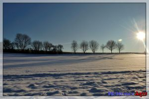 Snowy fields wth trees by mchenry