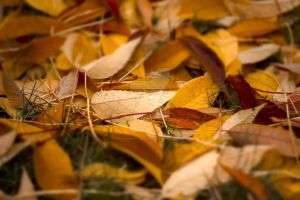 Fall Leaves by KingPinPhotography