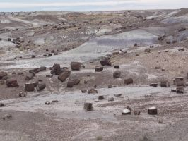 Trips to Petrified Forest NP 28 by Sting-raptor