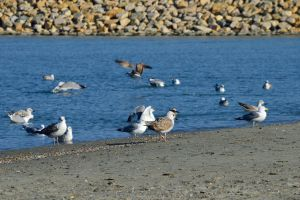 Seagulls on the shore by MihneaCernat