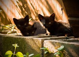 3 Little Kittens by georgiaartist