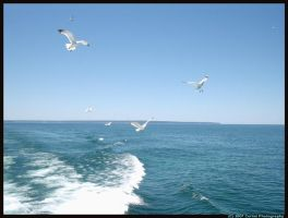 Gulls and Waves by silverwolfchild17