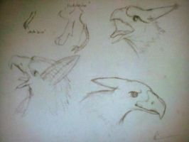 My own species 'head sketches' -  Lepgryus by Panzaeron