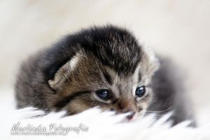 My first look into the world by Marliinda