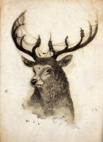 Stag by Alex-View