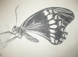 Butterfly by CatiaIsabel
