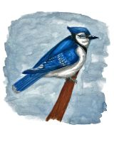 Blue Jay by 7mts