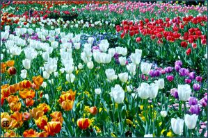 Flowers Of Floriade: 8 by sazze