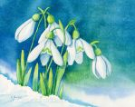 Snowdrops by Dusty-Feather