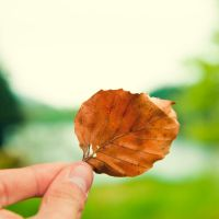 leaf by flugeiden