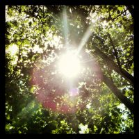 Light Pierces Through The Canopy by TropicalxLondon