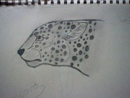 big cat sketch by veronicle