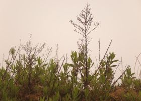 Green plant and mist by yuushi01