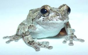 Treefrog by Thehappypet