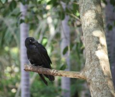 Crow in Tree4_Mind-Matter by Mind-Matter