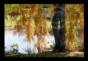 Weeping Willow by Uncaged