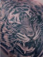 tiger tattoo by tattoo-designer