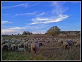 Sheeps by expressive87