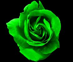 Green Rose by Genesis19