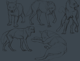 more wolf studies by ratt-face
