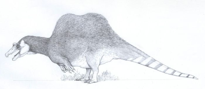 Spinosaurus sketched after Sereno et al. by yoult