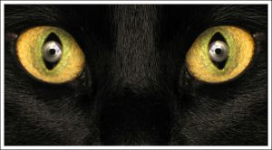 Panther eyes by bawarman