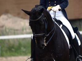 Dressage by wakedeadman