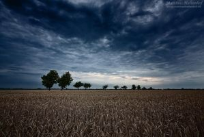 Line of Trees by MatthiasHaltenhof