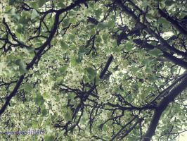 Flowered Tree by sandyandi146