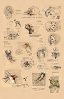 School - Animal Worksheet by fictograph