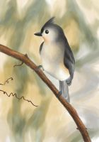 Tufted Titmouse by elddiReMsihT