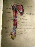 Hand, Muscles by KidaMaestro