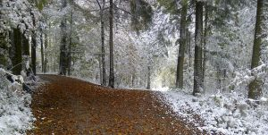 First snow on Autumn Leaves by lesley-oldaker