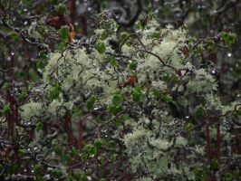 Love the lichens by DoodlebertDesigns