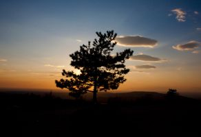 sunset in the tree by CVET