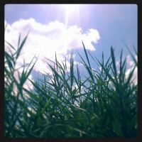 Grass reaching to the Sky by raverqueenage