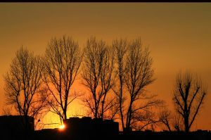 Four and a half Tree Sunset by rekokros
