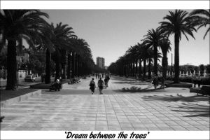 Dream between the trees by Makavelithedon