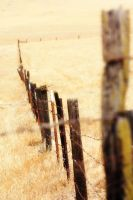 Fence by creatingJunk