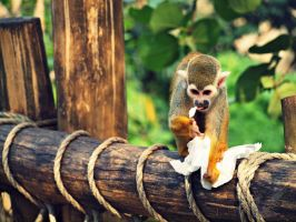Squirrel Monkey - I told you so! by MotherBlessing