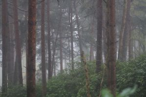 Down pour in the woods by cfowler7