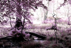 Tree Forest ~ Violet sun place  ~ AStoKo STOCK by AStoKo