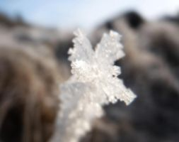 Frost spike by breatheinspiration