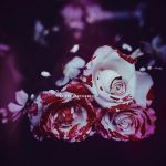 Painting the roses red by EliseEnchanted