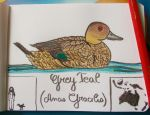 Grey Teal - Animal of the Month - July 14 by MoonyMina