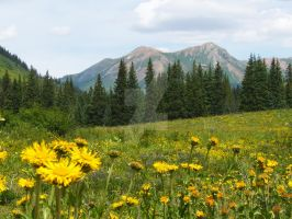 Wildflower Capital of Colorado by RandomTechie27
