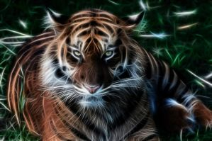 Tiger fractals by BDStudio